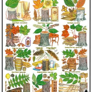Poster- The United States Forest Products
