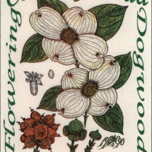 T-Shirts – Flowering Dogwood -Cornus florida